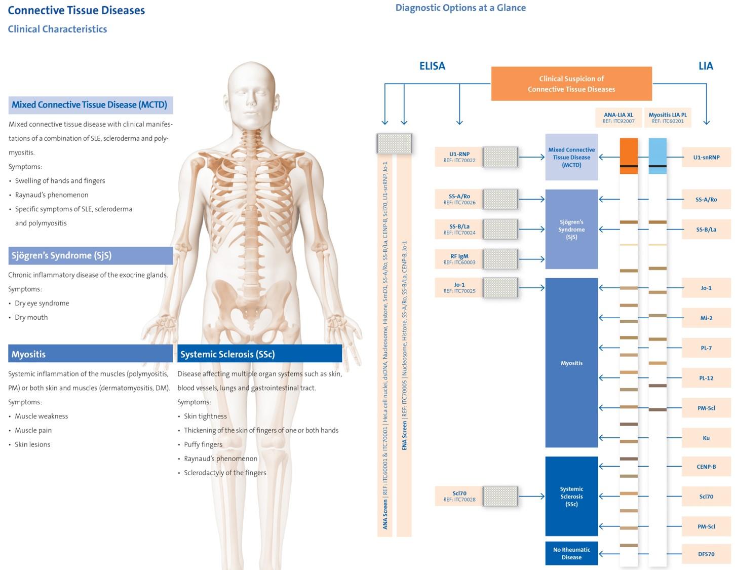 Kollagenosen (systemische Autoimmunerkrankungen)